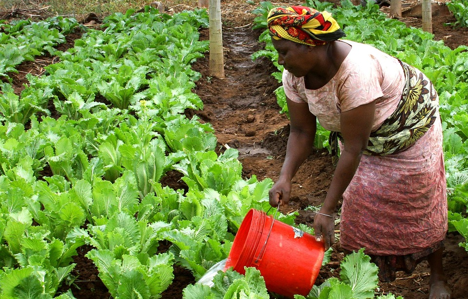 Making Farming More Productive in Africa